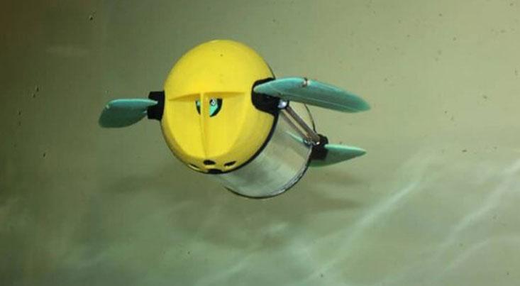 بررسی سلامتی ماهیهای پرورشی با ربات
