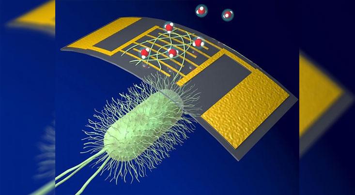ساخت یک حسگر شیمیایی جدید با پروتئین
