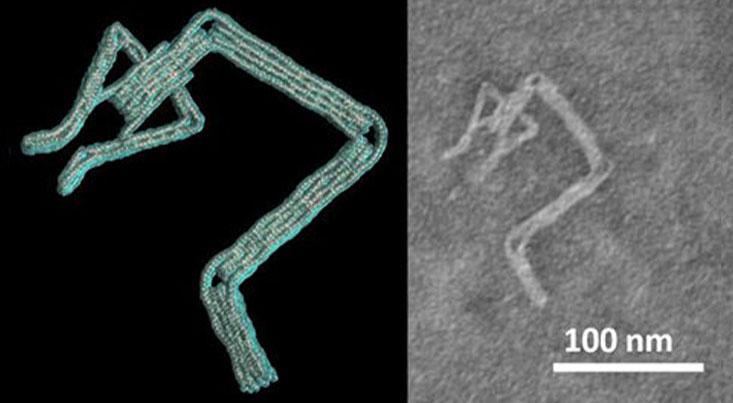 """طراحی نانوربات """"دی.ان.ای"""" با نرمافزار محققان دانشگاه اوهایو"""
